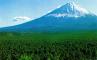 Лес Аокигахара, фото №3
